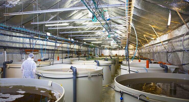 Hệ thống điều khiển và giám sát đầm ao hồ nuôi tôm
